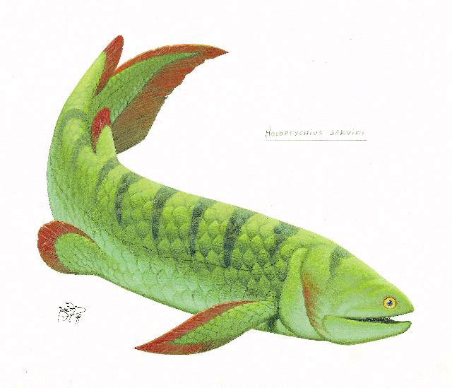 Reconstruction of the porolepiform Holoptychius jarviki