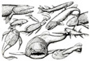 The fish fauna of Miguasha